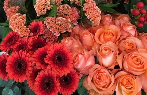 Blumen Lebenslust